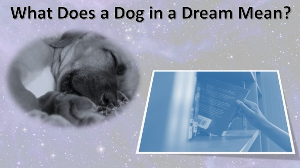 Dog in a Dream